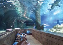 Sea Life Kansas City Aquarium Discount Family Fun In Omaha