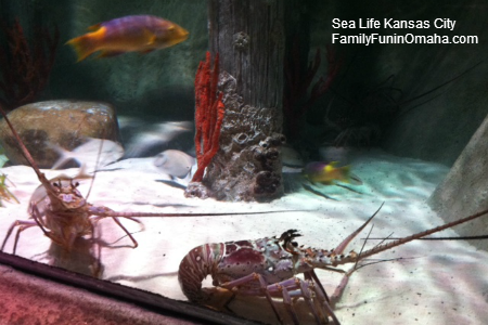 sea life aquarium kansas city family fun in omaha. Black Bedroom Furniture Sets. Home Design Ideas
