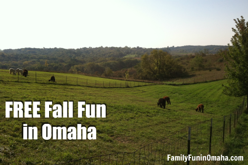 A herd of cattle grazing on a lush green field with overlay text that reads Free Fall Fun in Omaha