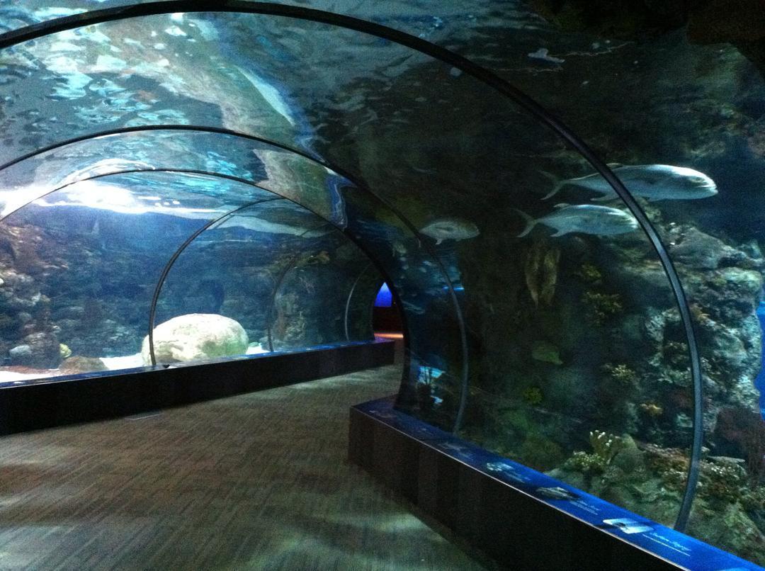 A glass aquarium tunnel at the Omaha Zoo and Aquarium.