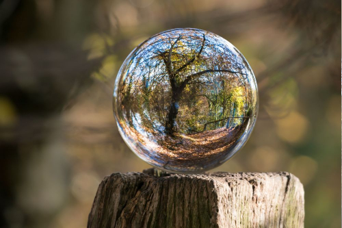 A close up of a glass ball on a wooden post with a reflection of a tree.