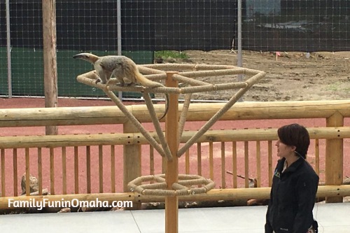 A wooden structure with an animal on it at the Lincoln Children\'s Zoo.