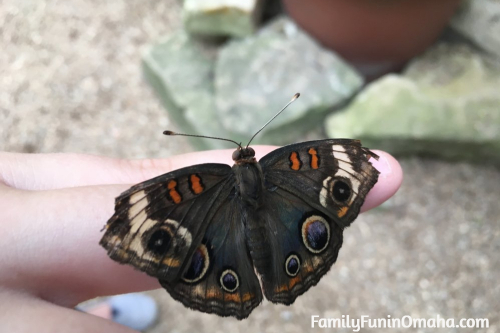 A close of someone holding a butterfly at the Lincoln Children\'s Zoo.