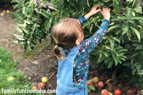 A little girl picking an apple at Arbor Day Farm.